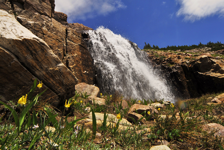 Small yellow flowers with long green leaves grow among short grass next to a waterfall splashing down the rocks.