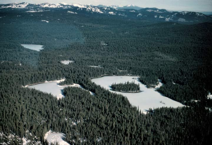 Several small odd-shaped lakes, surrounded by dense forest.