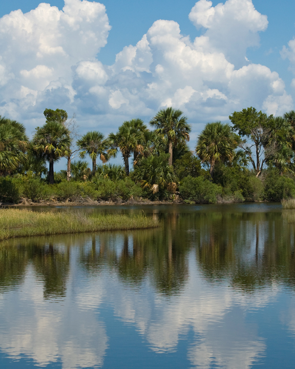 A line of palm trees sits under a cloudy blue sky--the entire scene is reflected in the water below.