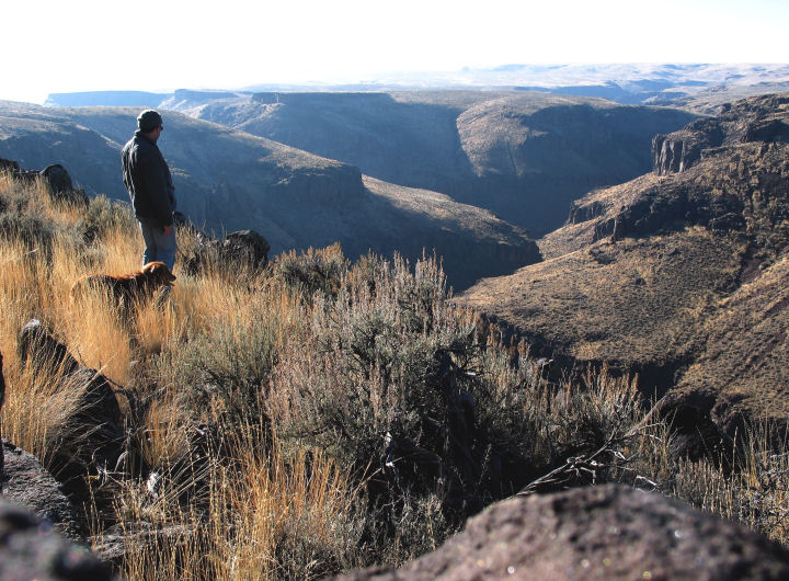 A man and his dog look over the edge into a deep canyon.
