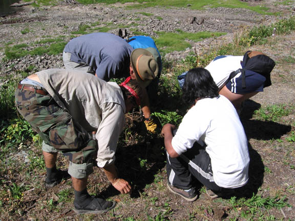 Volunteers invesigate an area in the ground. Taken during University of Montana summer 2007 volunteer weed inventory study.