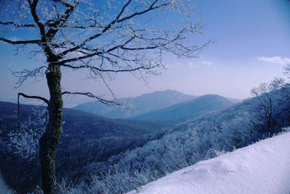 Another shot of Old Rag Mountain in winter. The rolling mountains house trees and snow.