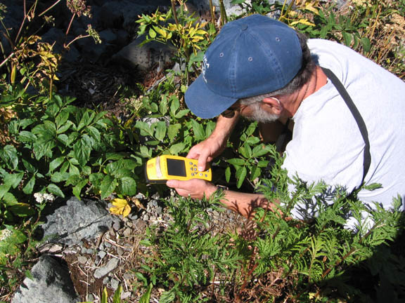 A volunteer uses an electronic device during University of Montana summer 2007 volunteer weed inventory study.