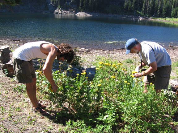 Two volunteers investigate plants near a river in the Rattlesnake Wilderness. Taken during University of Montana summer 2007 volunteer weed inventory study.