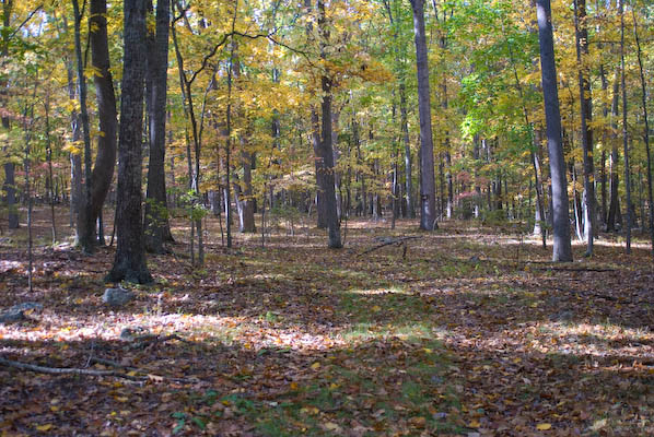 Another photo capturing the tree and ground of the Jefferson National Forest, Virginia during autumn.
