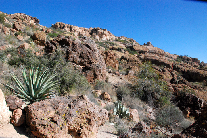 Plants survive in any place between the rocks and boulders of Superstition Wilderness.