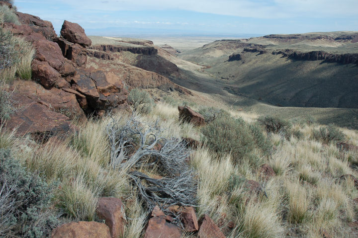 A rocky slope covered in sagebrush and grass slopes down into a shallow ravine.
