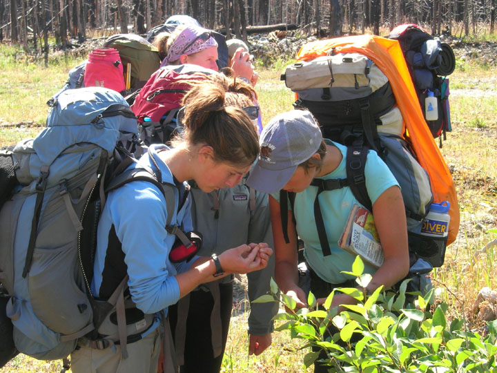 College students inspect native plants during an experiential backpacking field trip.