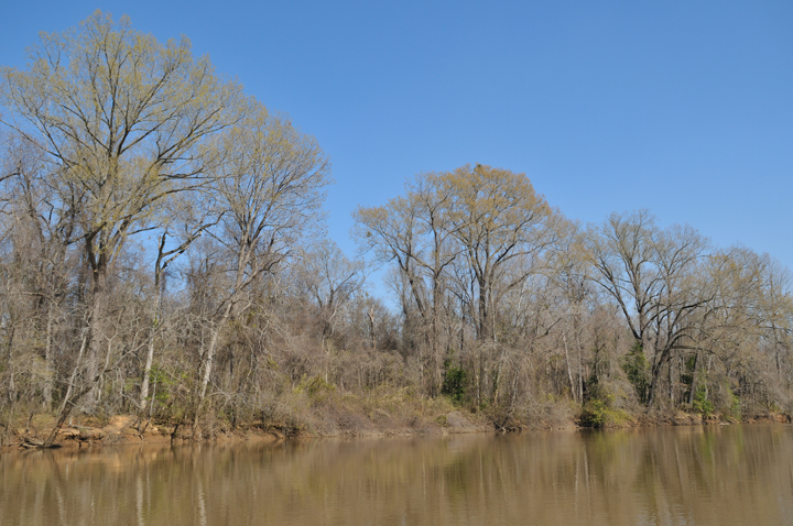 The murky brow of the river shows a faint reflection of the bare-branched trees that line its banks.