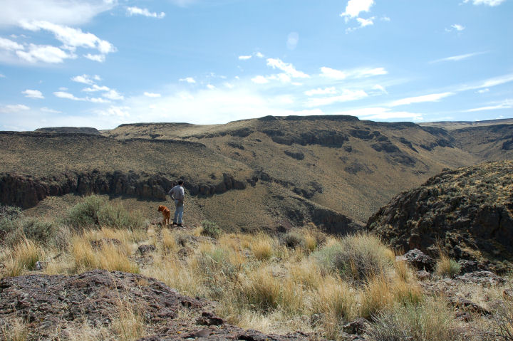 A man and his dog gaze over the edge of a canyon with blue sky above.