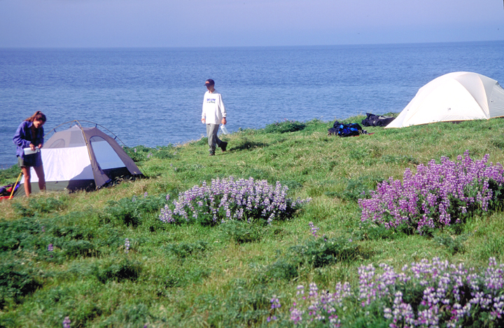 A few batches of purple flowers dot a green rise.  Two figures walk the edge between two tents, and just behind them is a wide expanse of blue sea.
