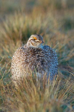 A close up of a very somber looking ground bird.
