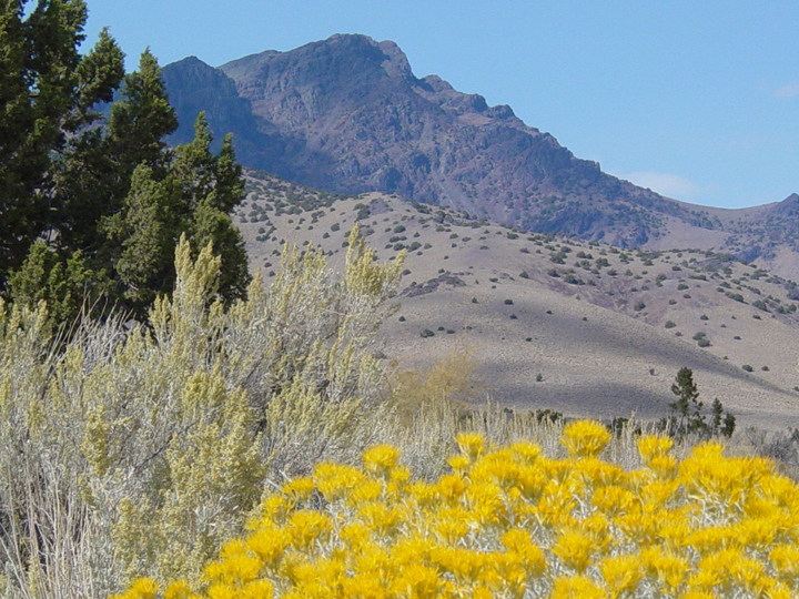 In the foreground is a patch of beautiful yellow wildflowers.  Rising behind is the majestic peak of a far off mountain, bathed in the shadows of clouds.