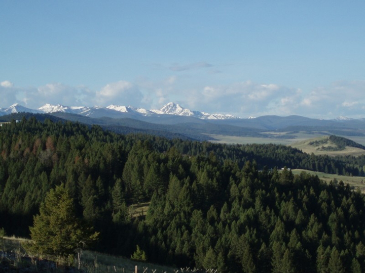 Warren Peak as seen from the Flint Creek Valley. The valley is blanketed with pine trees and the mountain range in the distance is covered with snow on a clear sunny day.