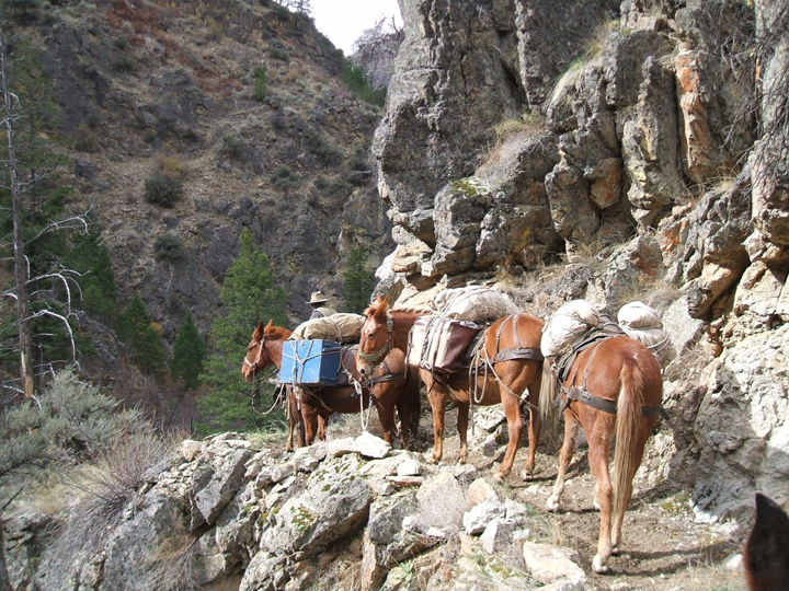A pack string of four mules works its way across a narrow, rock strewn path.  On their right is a massive, stony cliff face.