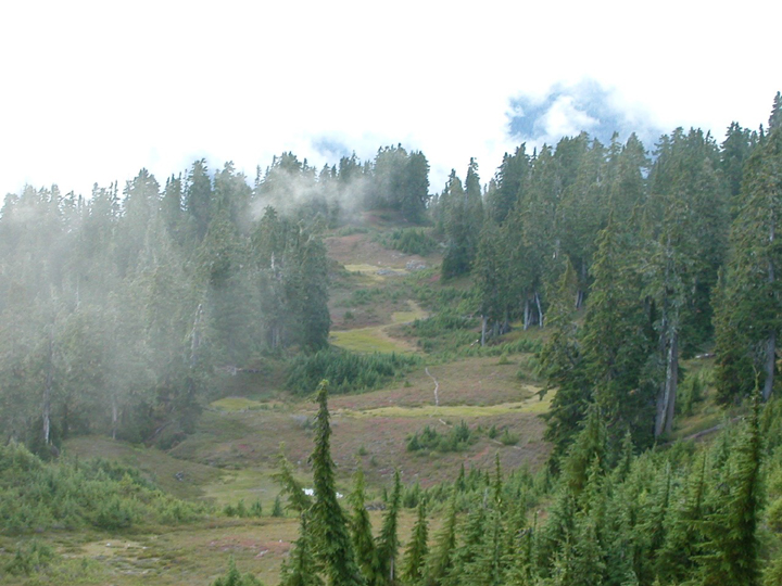 Mist sweets over a forested hill, patched over in shades of green and brown.
