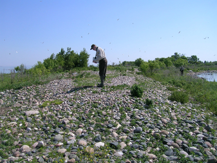 USFWS biologists conduct nesting colonial waterbird survey at Michigan Islands National Wildlife Refuge.