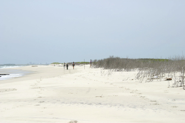 A group of hikers is far off down the white sandy beach.  Tall grasses grow opposite the surf that's coming in.
