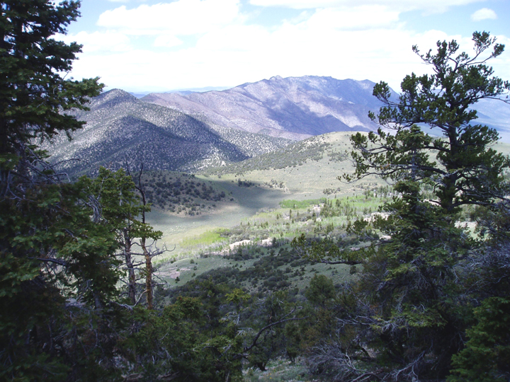 A view from the side of a mountain valley, showing a forest around and below.