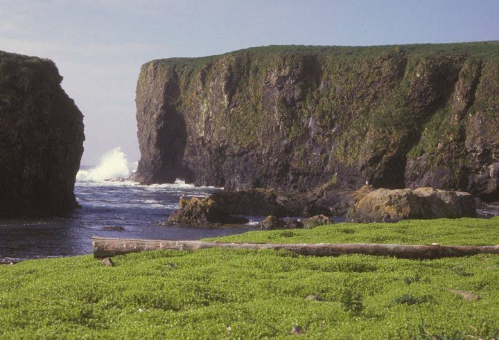 A vibrant green field dominates the foreground, and a massive sheer cliff is the back.  Between a small break in the cliffs, waves crash on the rocks.