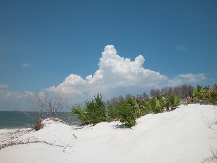 Green ferns are a brilliant contrast against white sands and blue skies.