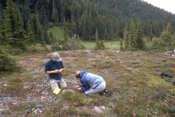 Two men work on a lithic scatter, picking over small artifacts in a small meadow valley.  Beyond them is the forest, rising up a ridge in a shadow of green.
