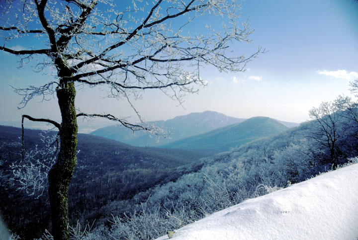 A glittering ice covered tree overlooks a snow covered series of mountains.  The winter sun is shining on a vista that is entirely shaded blue.