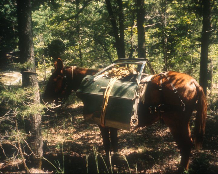 A mule has two car doors tied to his packs as he transports this garbage out of the wilderness.