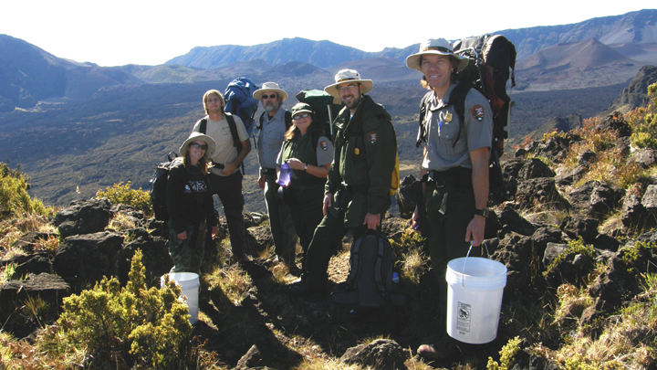 Agency staff pose for a photo during out-planting endangered endemic plant species in the summit wilderness.