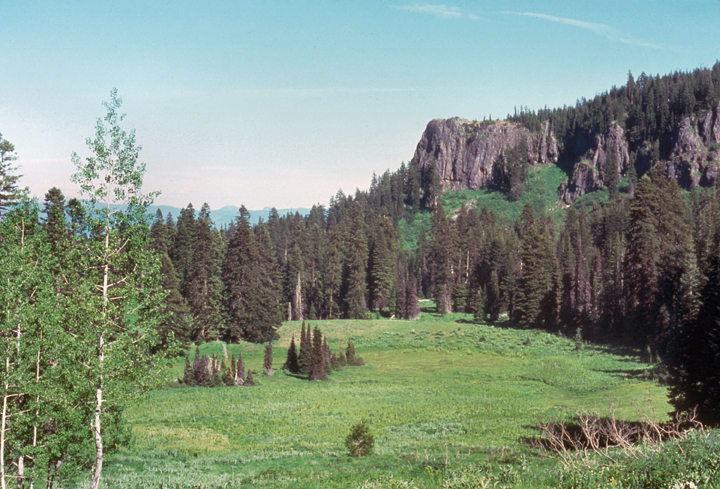 A valley houses pine trees and deciduous trees in the Rogue-Umpque Divide Wilderness.