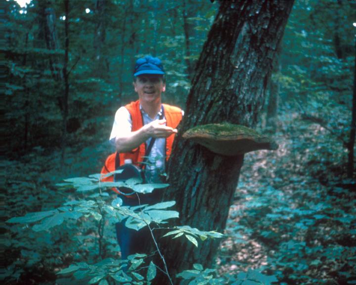 An orange vested botanist shows off a large mushroom growing on a tree.