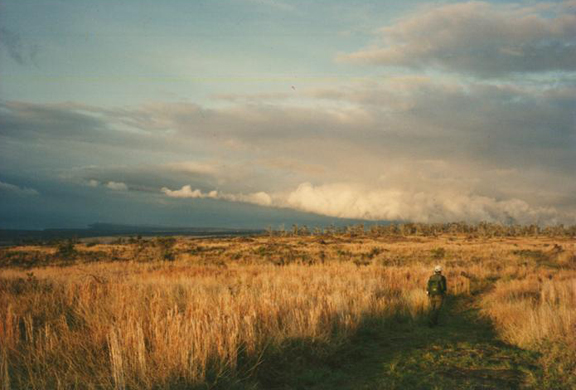 A golden plain sits beneath a cloudy blue sky.  A single hiker weaves his way through the tall grasses, back to the camera.