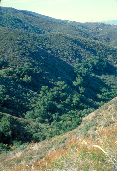 A brushy hillside looks down into a green, forested valley bottom.