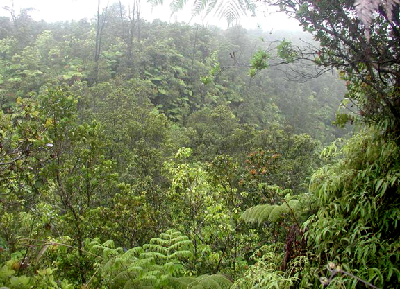A tropical rainsforest is shrouded in fog.  Primeval trees and vines can be seen, as well as massive ferns and bushes.
