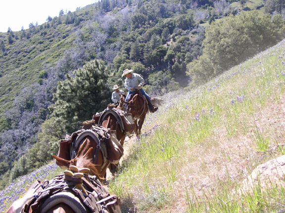 Two riders form the tail end of an equine pack string.  The group is moving through tall grasses and brush on a very vertical slope.