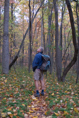 Hiker on Appalachian Trail stares up at the trees in autumn in the Jefferson National Forest, Virginia.