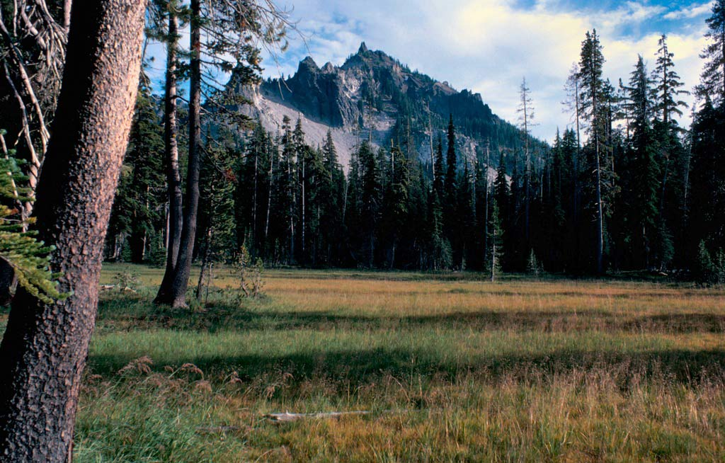 A rocky peak rising above alpine forest, surrounding a small meadow in the foreground.