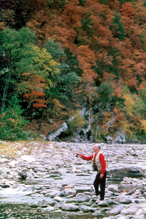 An elderly man in a red shirt flyfishes along a small river surrounded by golden trees.