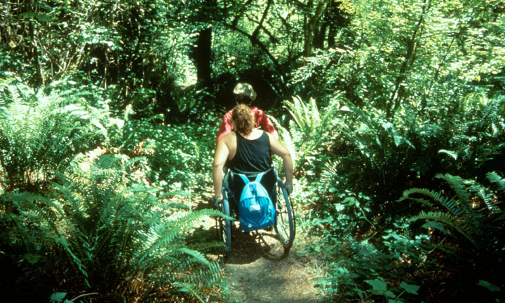 Two visitors in wheelchairs travel along a forest path surrounded by lush green undergrowth.