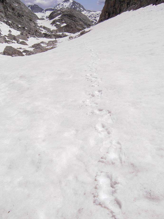 A single set of footprints leading away through a snowfield, towards rocky peaks ahead.