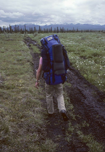 A backpacker treks along a path created by an Off The Road Vehicle.