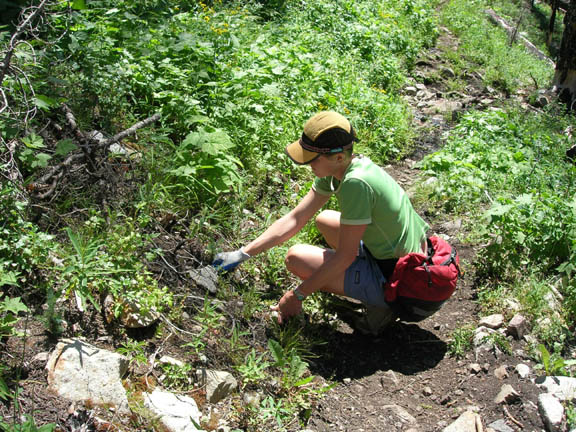 A volunteer investigates soil/plants near the edge of a trail. Taken during University of Montana summer 2007 volunteer weed inventory study.