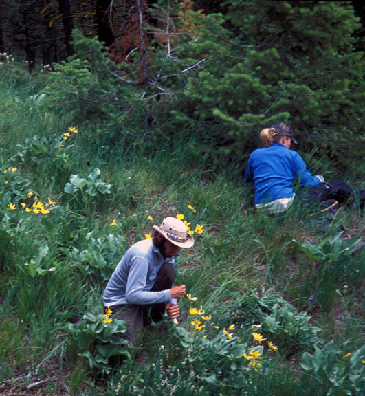 Two volunteers analyze plants on a hillside. Taken during University of Montana summer 2007 volunteer weed inventory study.