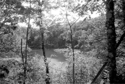 A black and white photograph of a small pond, surrounded by dense forest.