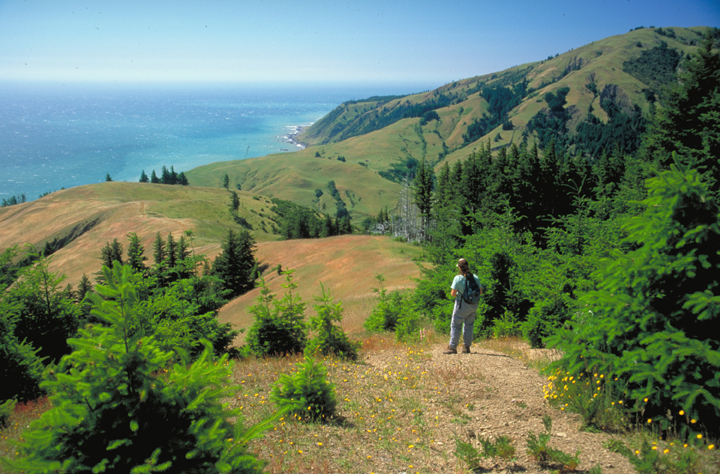 A view from above shows a lone hiker standing on a golden ridge.  Beyond and below are more hills and finally a dramatic cliff gracing the edge of the ocean.