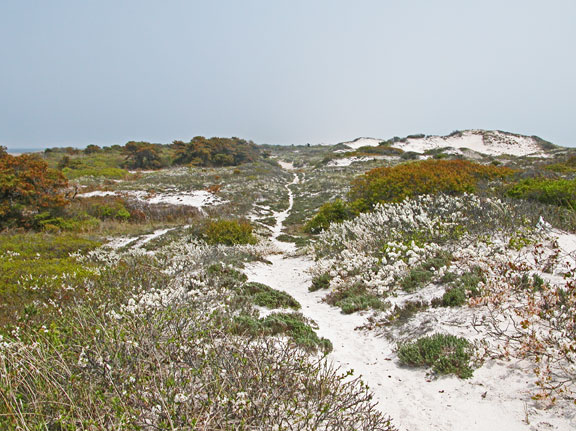 A long track of sand weaves over and through the brush littered dunes.  Greens and browns are a sharp contrast to white sand and blue skies.