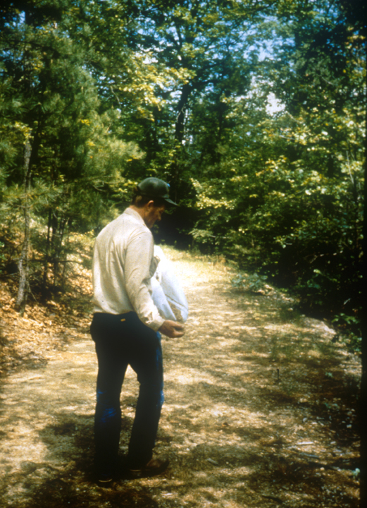A man walks along a road, dropping seeds in his wake.