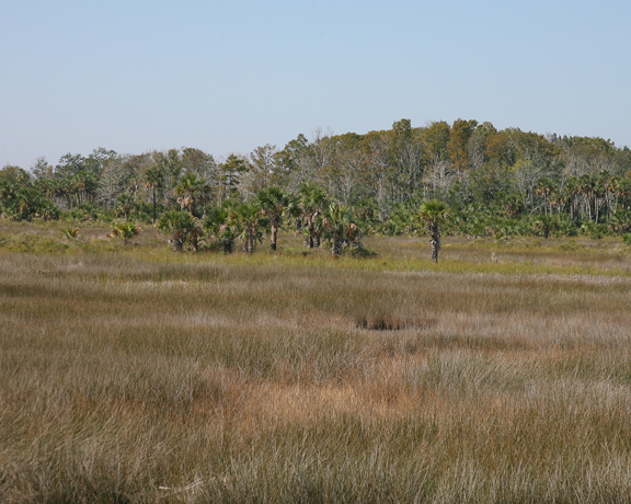 Thick golden grasslands give way to green forest.