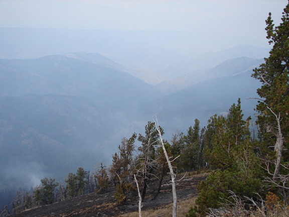A few skeleton trees--victims of fire--stand on a ridge overlooking a foggy valley below.