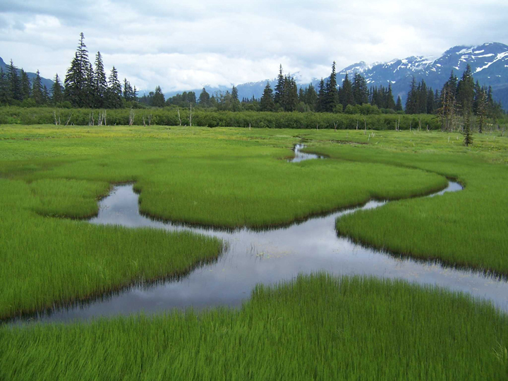 A lush green meadow is flooded with water reflecting the clouds above with mountains in the background.